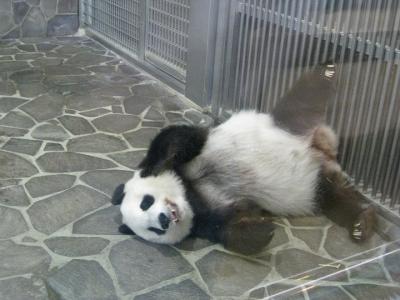タンタン 寝そべる