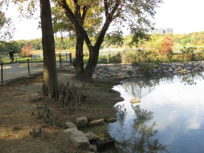 昆陽池・給餌池の風景 2