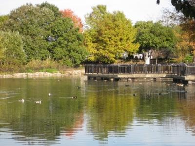 昆陽池・給餌池の風景 1