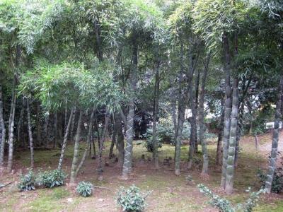 亀甲竹の林