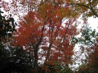 門前から見た紅葉 2