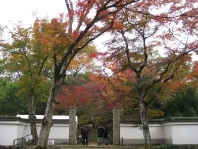 門前から見た紅葉 1