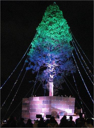 アスナロのクリスマスツりー グリーンとブルーのライトアップ