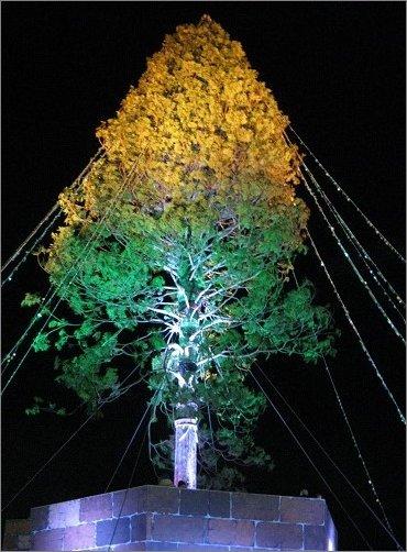 オレンジとグリーン色のライトアップ アスナロのツリー