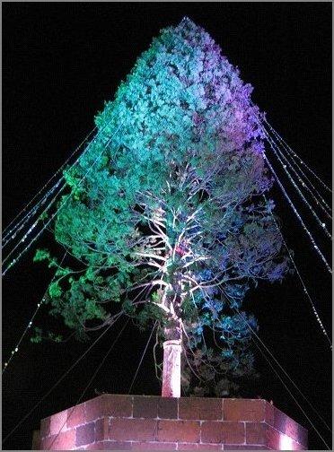 グリーンとバイオレット色に輝くアスナロのツリー