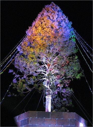 オレンジとバイオレットのライトアップ アスナロのツリー