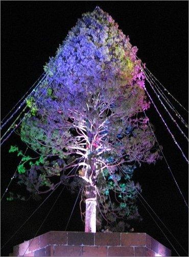 七色に耀く アスナロのツリー