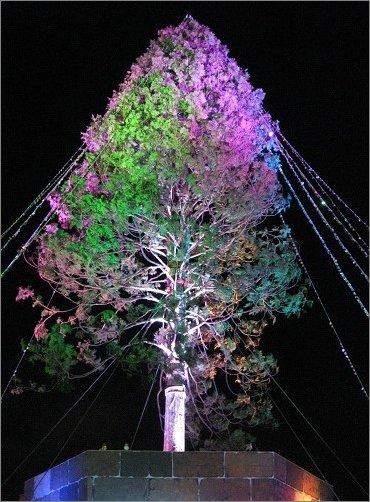 レッドパープルとグリーンのライト アスナロのツリー