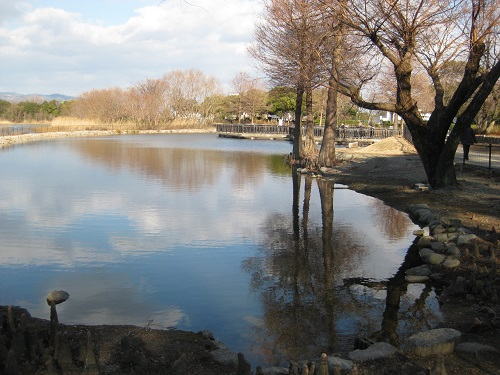 昆陽池・給餌池