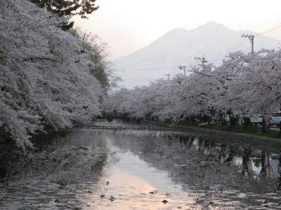 弘前城濠端の桜