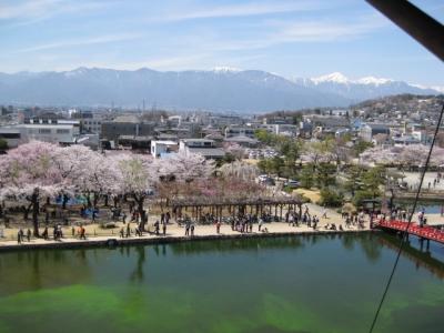 松本城天守三階の武者窓から見た桜