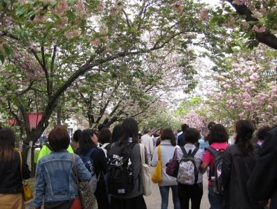桜の通り抜けする人々