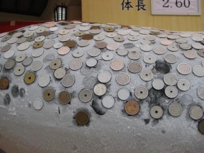 大まぐろの皮に白い霜, 硬貨のお賽銭がよく付いてる