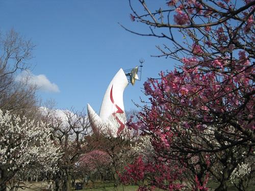 太陽の塔と梅林の梅