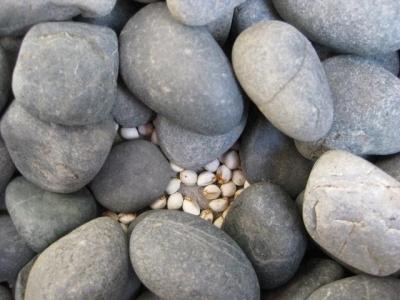 玉石の中から種子が出てきた