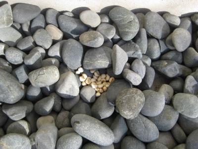 玉石 退けるとナンキンハゼの種子