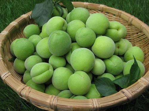 白梅の果実 青梅