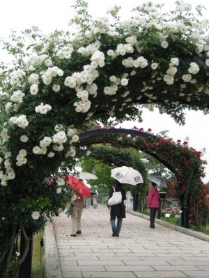 バラのアーチ 散策する人