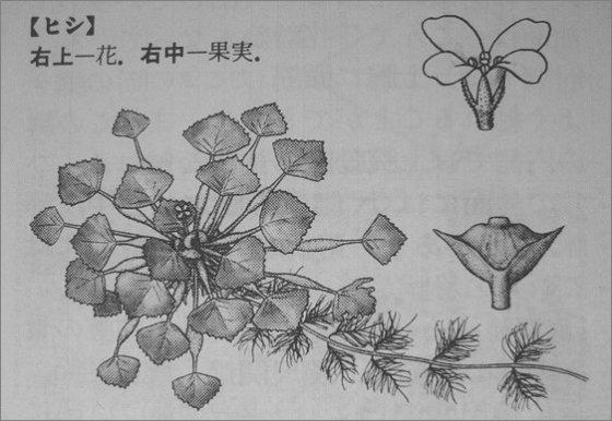 菱の構造図