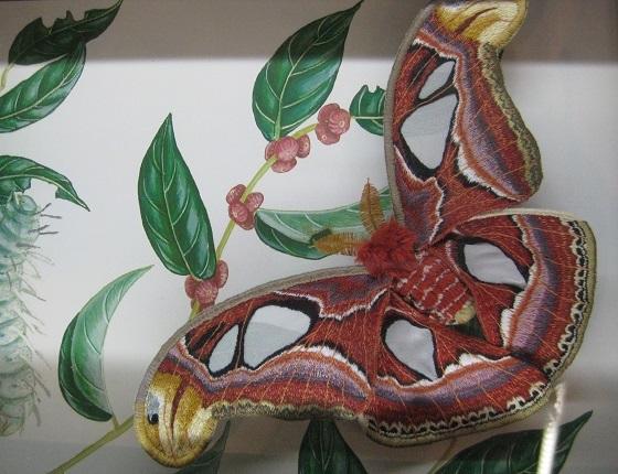刺繍の蛾ヨナグニサン