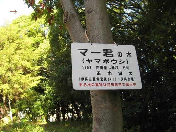 マー君サインの樹名板(仮)