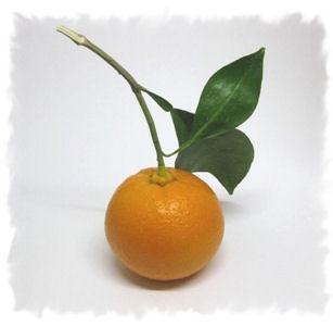 橙・ダイダイ 2