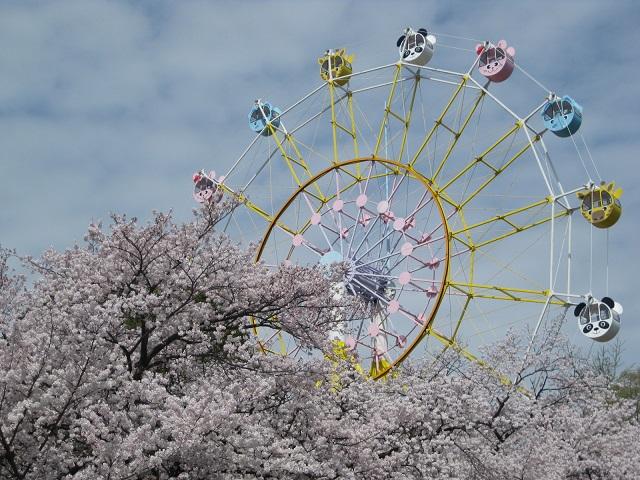 観覧車と桜