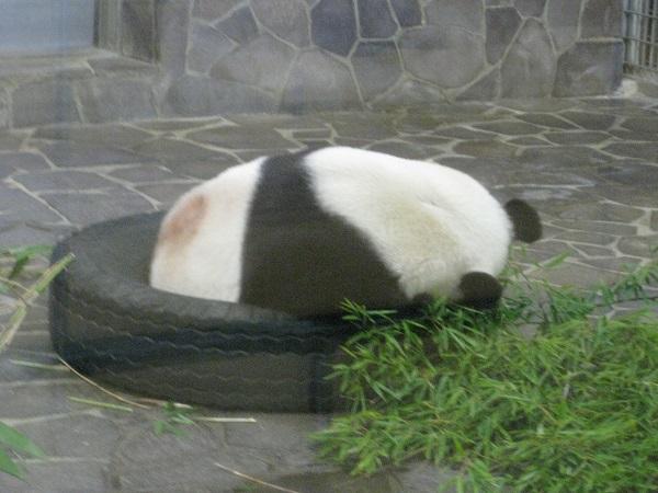 タンタン 眠る