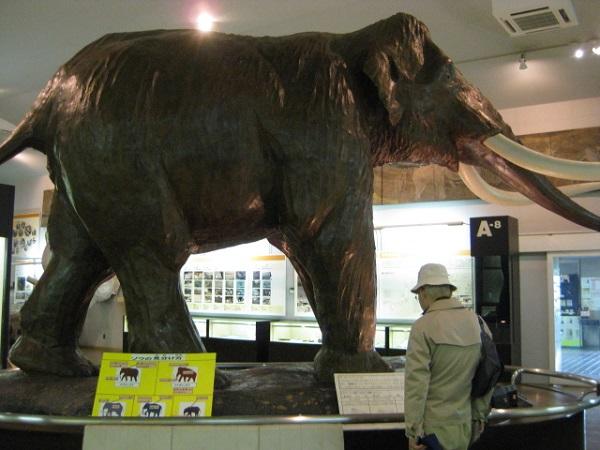ナウマンゾウ 実物大の復元像
