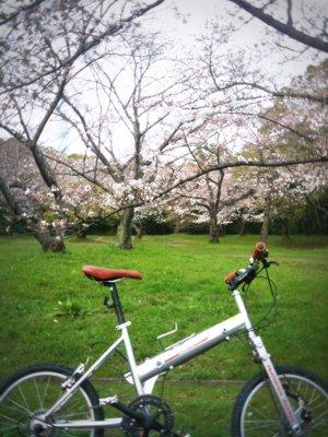 yahichi_2wd_sakura