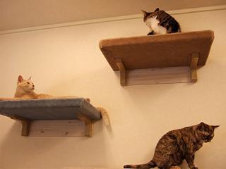 いろんなところに猫さんたち。