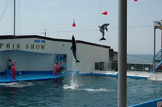 すごいジャンプ!!