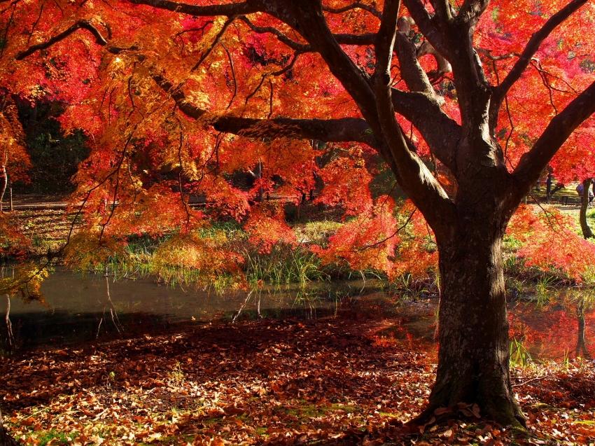 泉自然公園2 (1).JPG