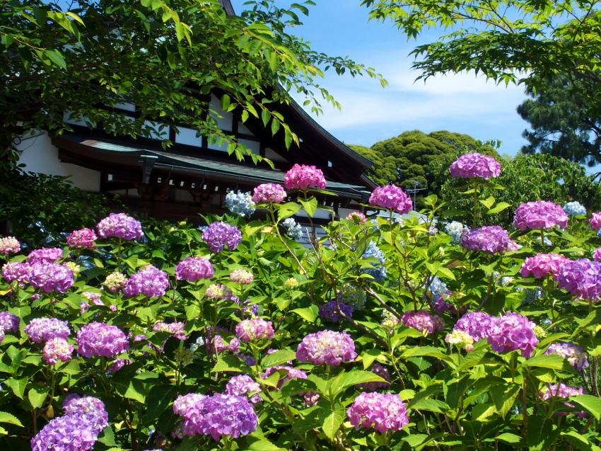001本土寺.JPG