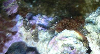 サンゴかな?