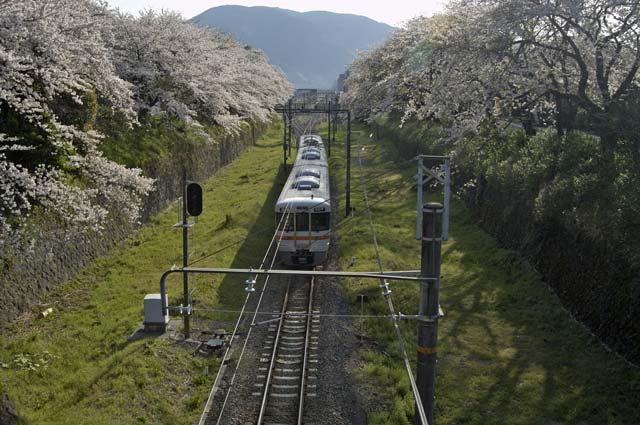 御殿場線と桜