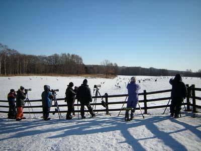 鶴居村のタンチョウを狙う写真家たち