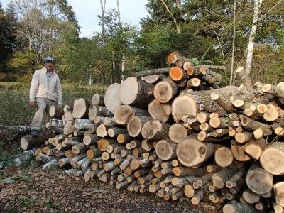 裏庭の伐採された木