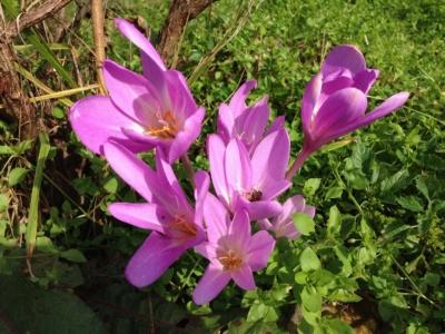 放置ちゅうの雑草畑に花が咲いた