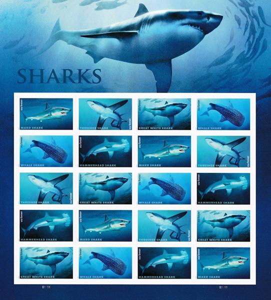 piyonne.com-sharks1.jpg