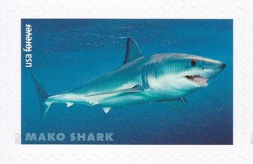piyonne.com-sharks2.jpg