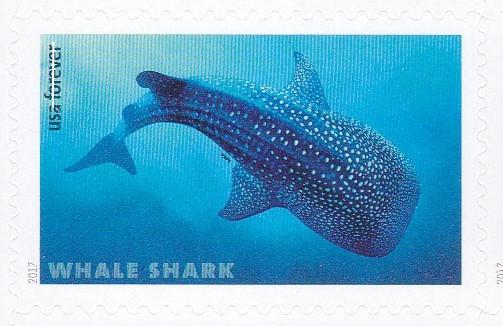 piyonne.com-sharks3.jpg