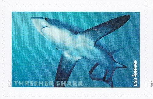 piyonne.com-sharks4.jpg
