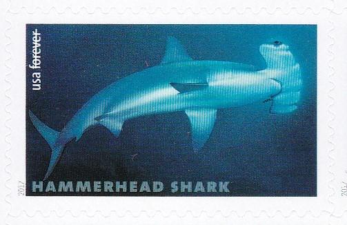 piyonne.com-sharks5.jpg