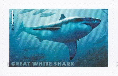 piyonne.com-sharks6.jpg