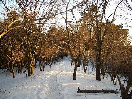 夕日に照らされた樹木と白銀の世界