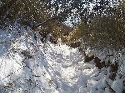 大山山頂からヤビツ峠に降りる道は狭い