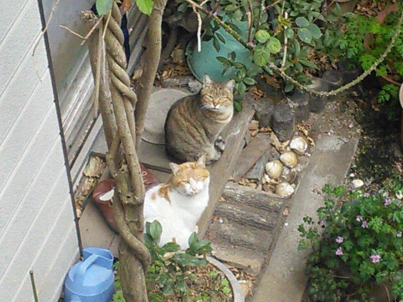 庭に来る野良猫2匹