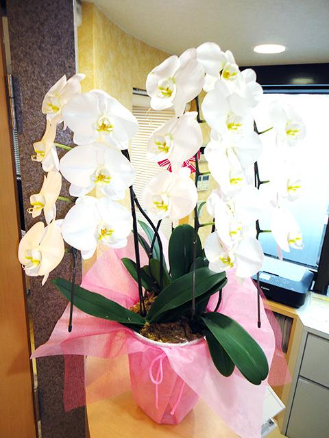 訪問診療に伺っていた患者様からお花を頂きました