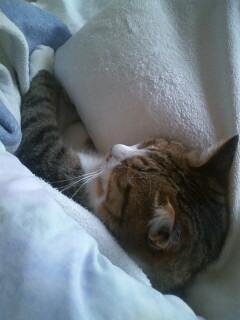 ベッド独占